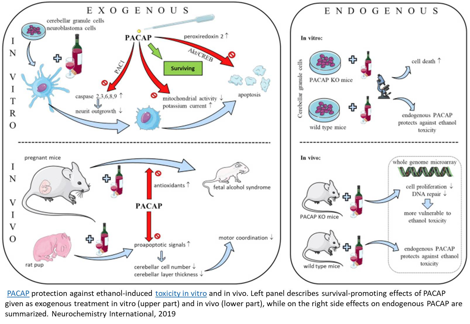 Pituitary peptide modulates alcohol dependence and anxiety-like behavior