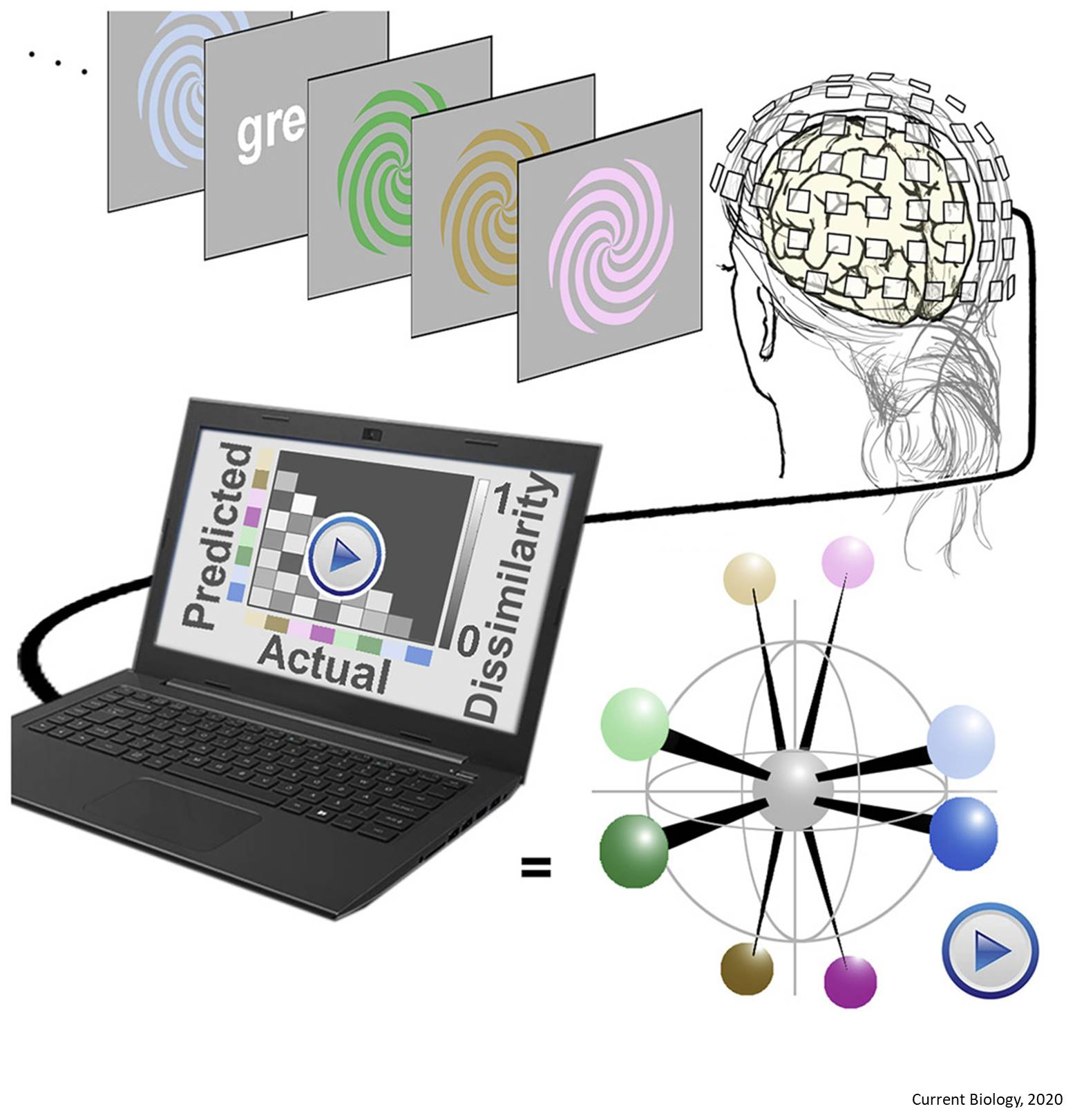 Decoding the brain map of color processing