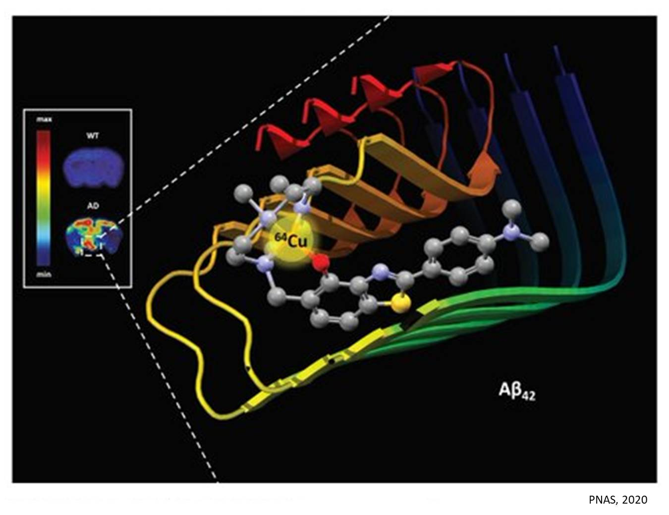 Imaging Alzheimer's amyloid aggregates in the brain using copper