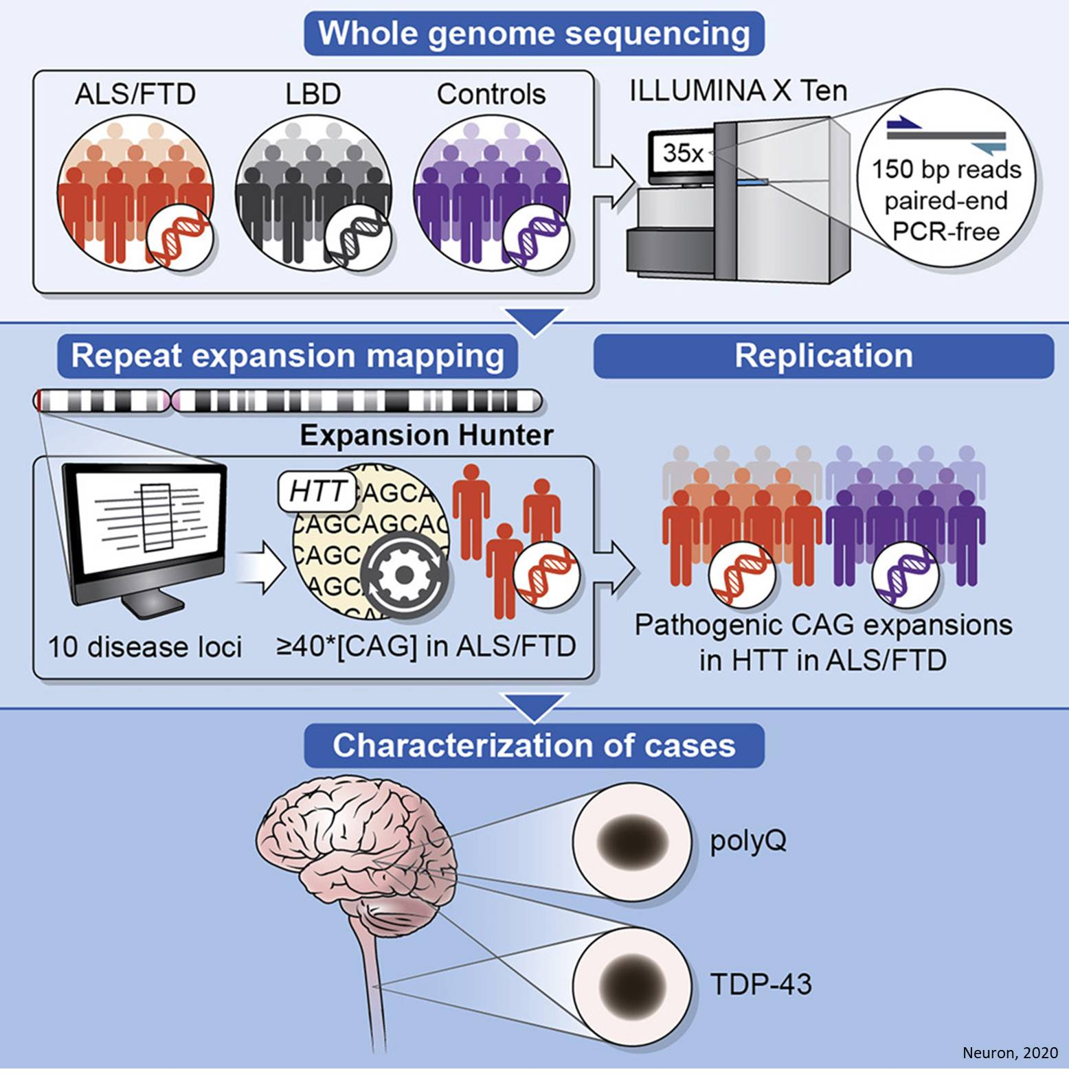 Huntingtin repeat expansions seen in some ALS and FTD patients