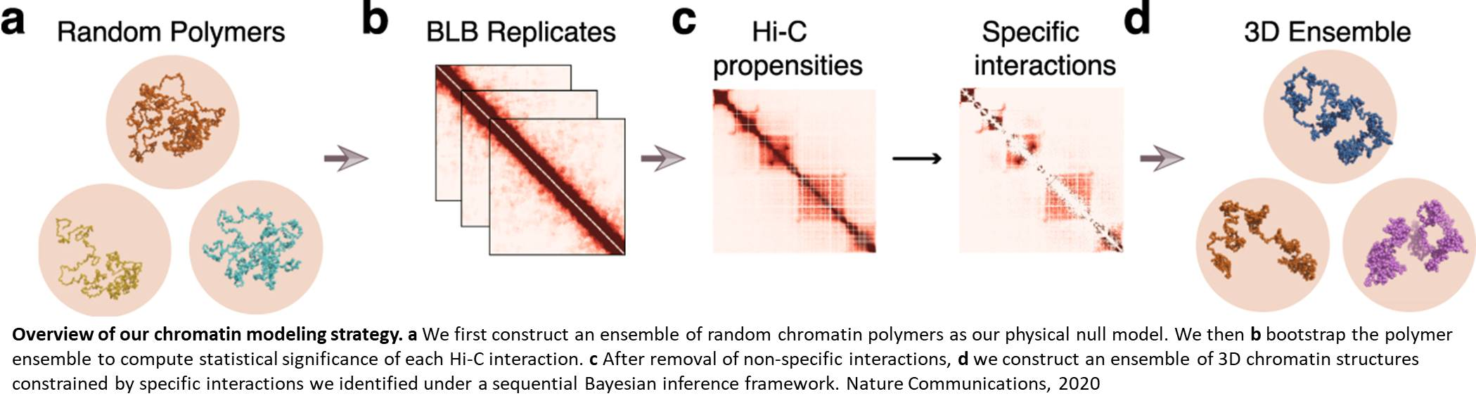 Reverse engineering 3D chromosome models for individual cells