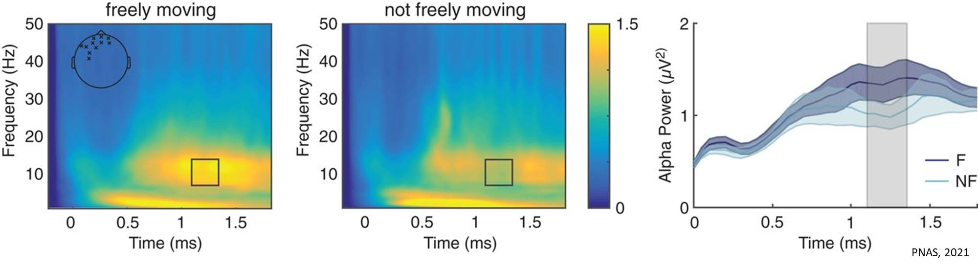 Electrophysiological signature of wandering brain
