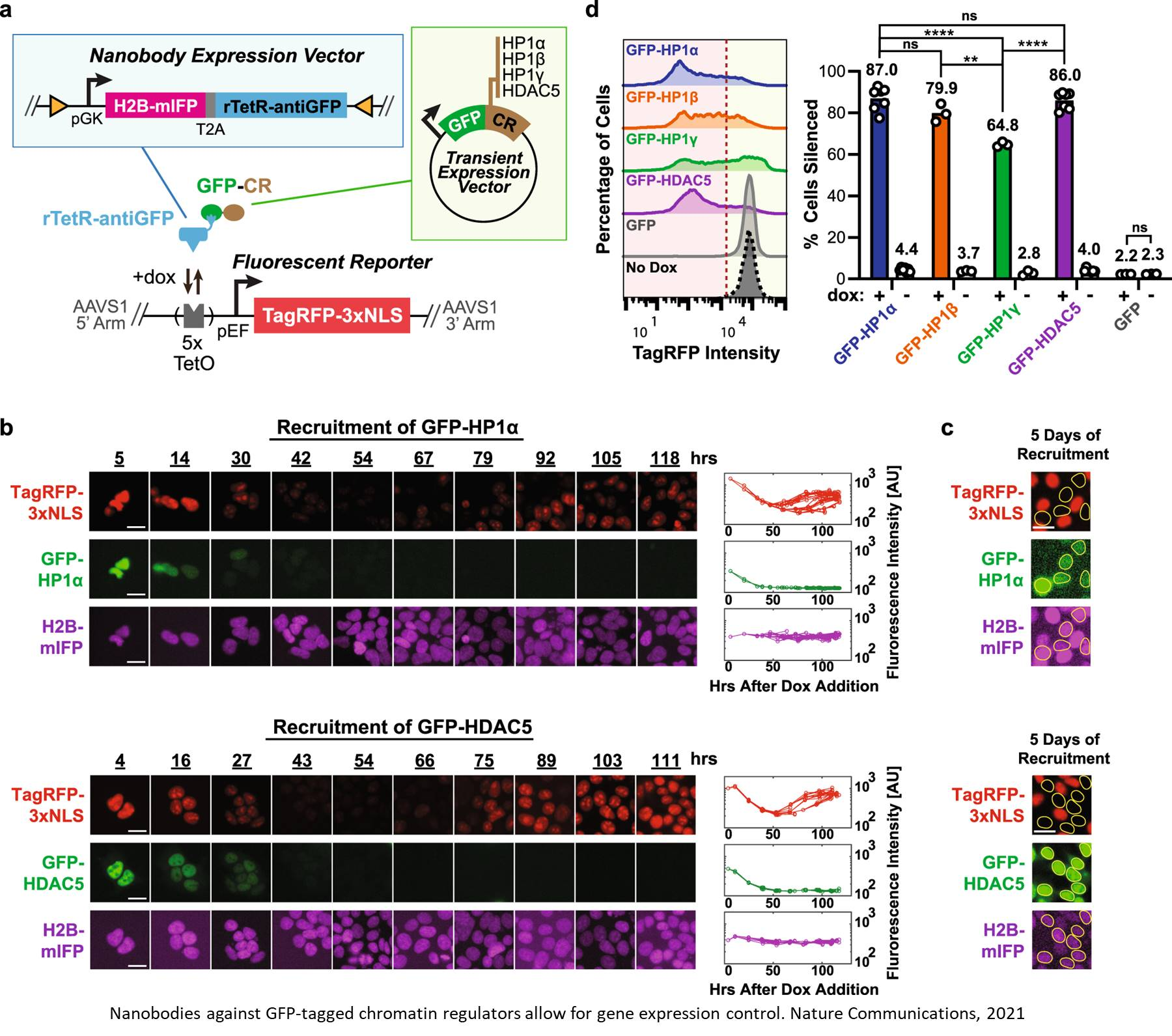 Nanobody-mediated control of gene expression and epigenetic memory