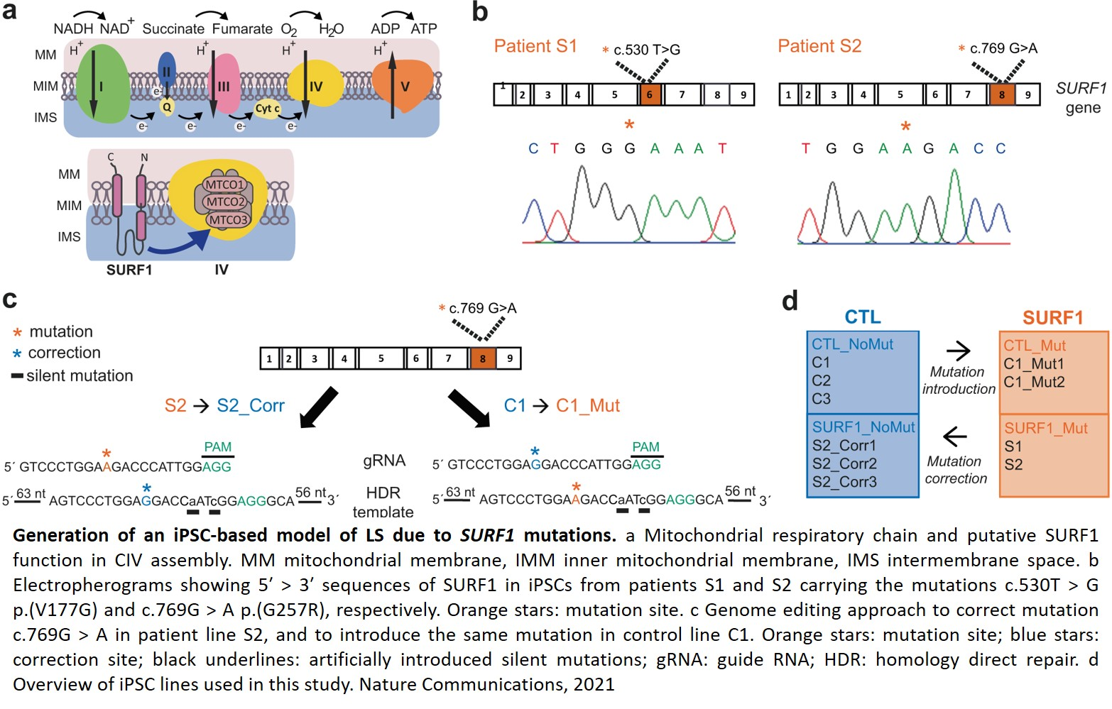 Defective metabolic programming in the first human model for rare disease-Leigh Syndrome