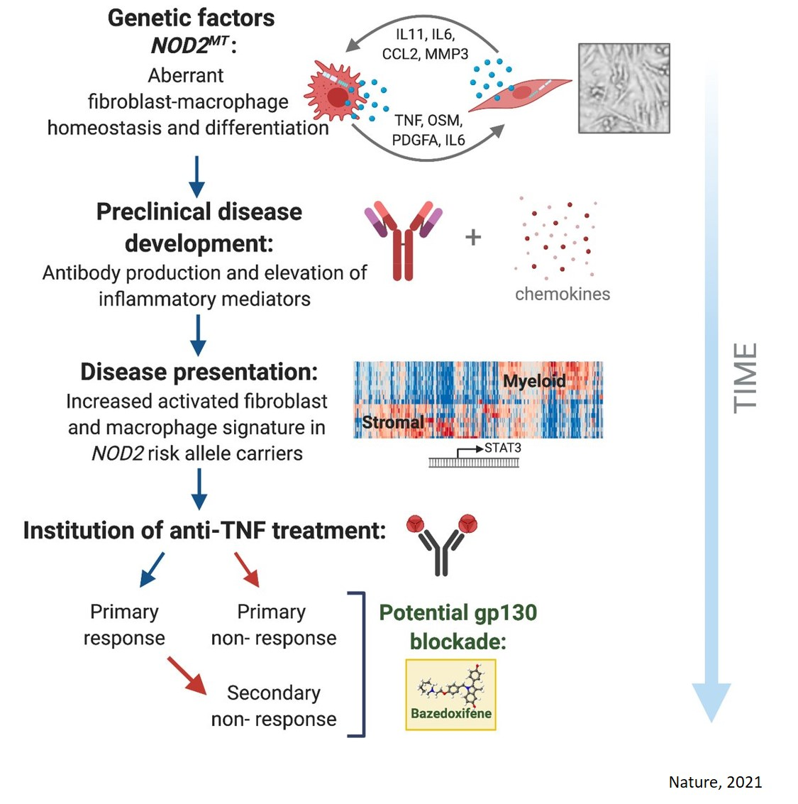 Genetic and cellular mechanisms of Crohn's disease