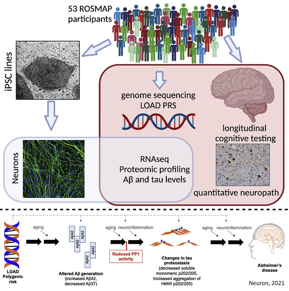 Predicting cognitive outcome from human stem-cell derived neurons