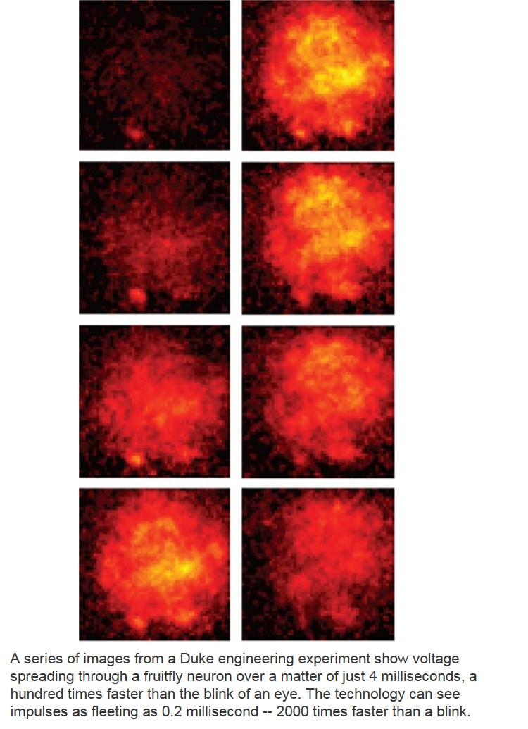 Real-Time View of Neural Activity