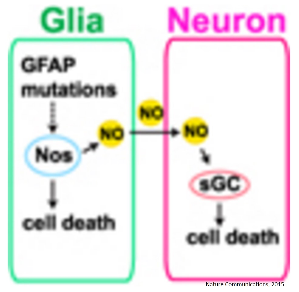 Nitric oxide mediates glial-induced neurodegeneration