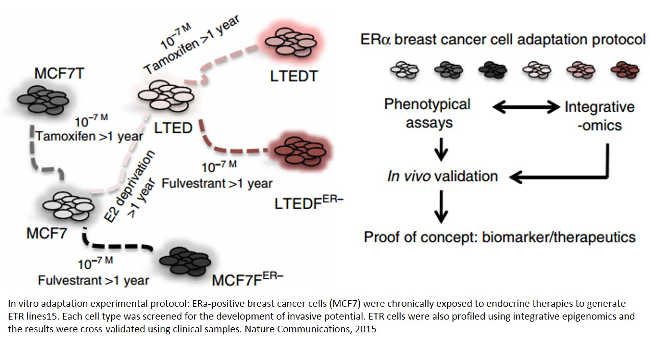 Mechanism of adaptation of breast cancer cells to individual therapies