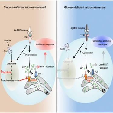 Role of a glycolysis metabolite in controlling cancer