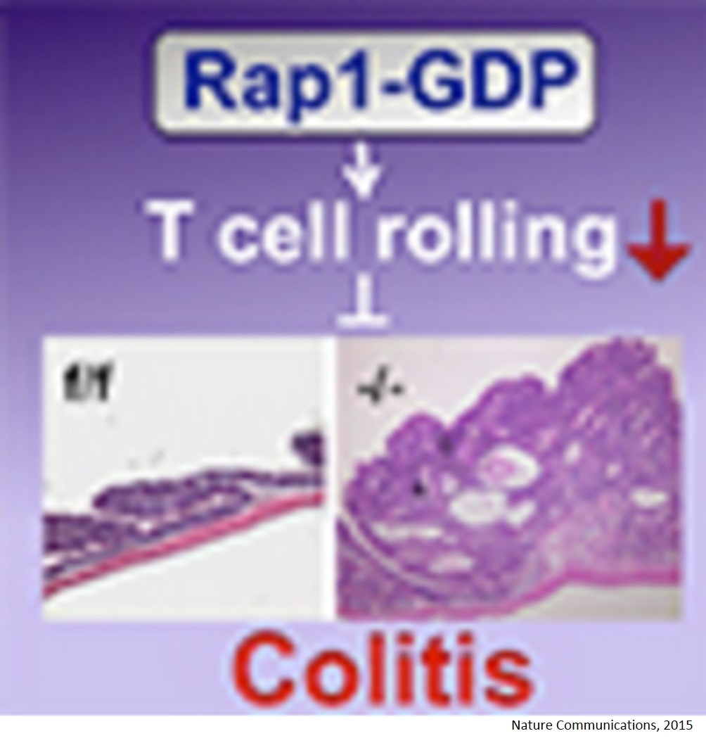 Dual functions of Rap1 are crucial for T-cell homeostasis and prevention of spontaneous colitis