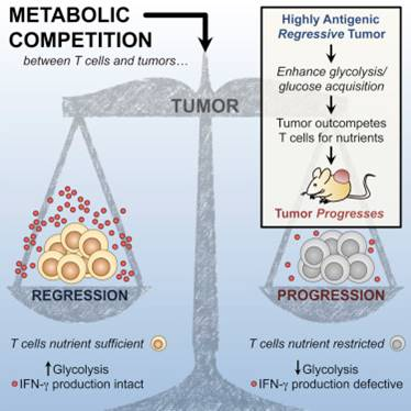 Metabolic competition in the tumor microenvironment Is a driver of cancer progression