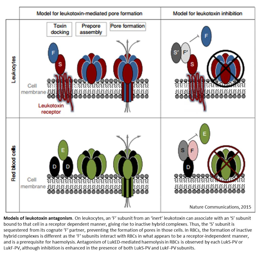 How bactrerial toxins control the virulence