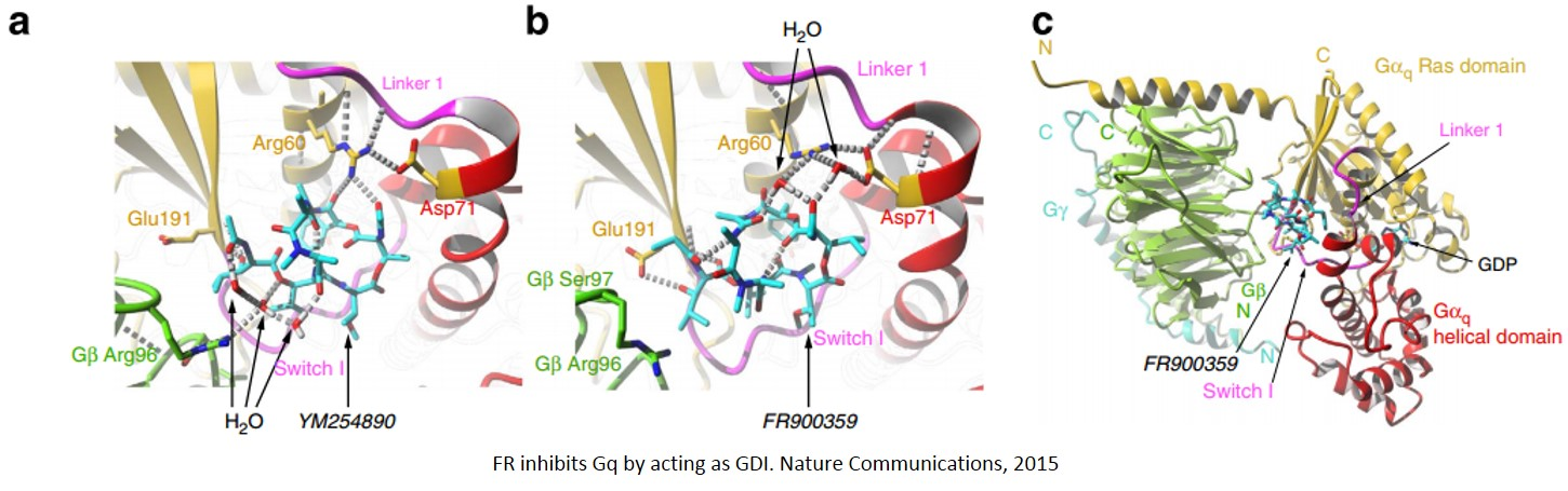 Inhibitor of Gq signaling pathway identified!