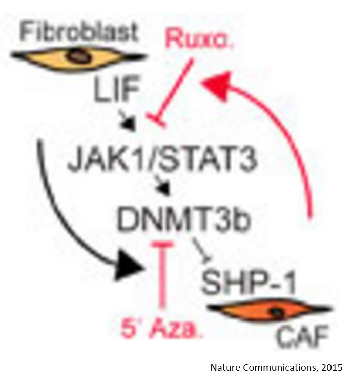 Epigenetic switch drives the conversion of fibroblasts into proinvasive cancer-associated fibroblasts