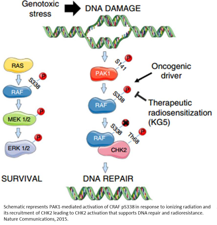 Dual function of a kinase renders therapeutic resistance to tumors