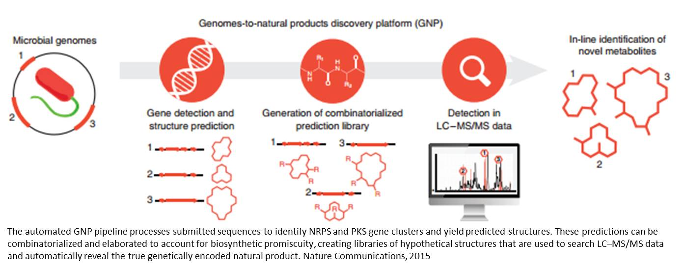 An automated Genomes-to-Natural Products platform (GNP)