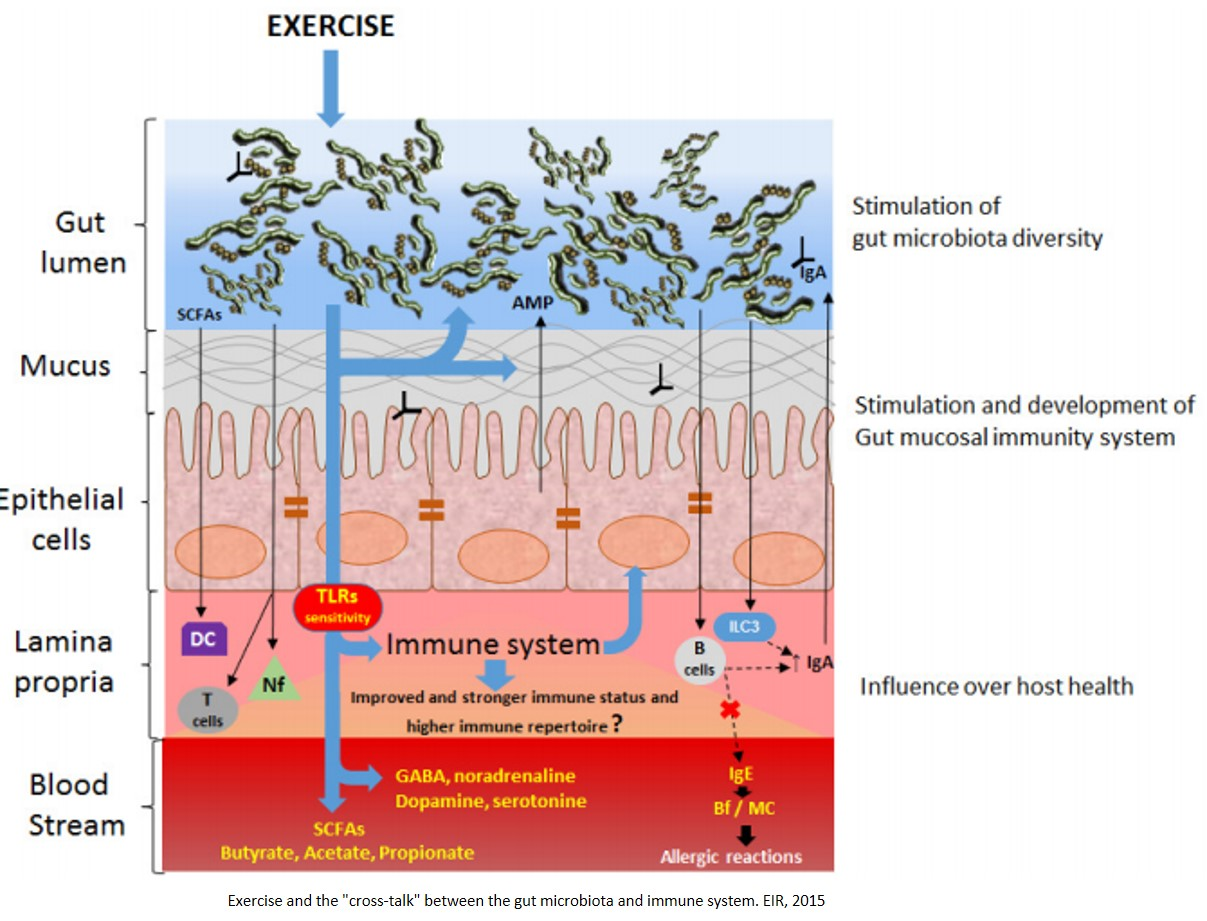 Early-life exercise alters gut microbes, promotes healthy brain and metabolism