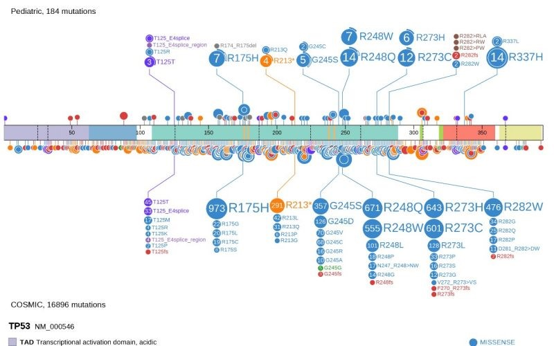 Powerful interactive tool to mine data from cancer genome