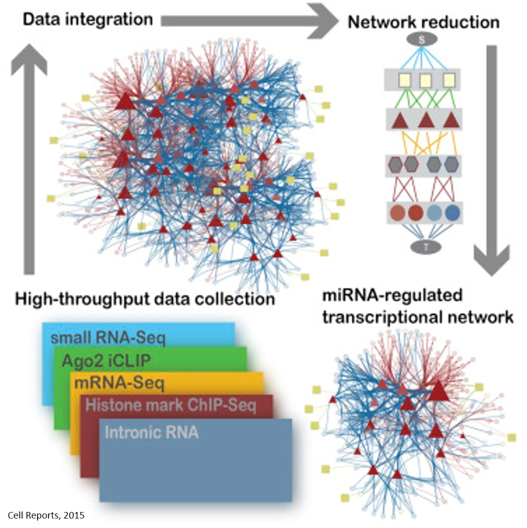 Characterizing miRNA-regulatory networks