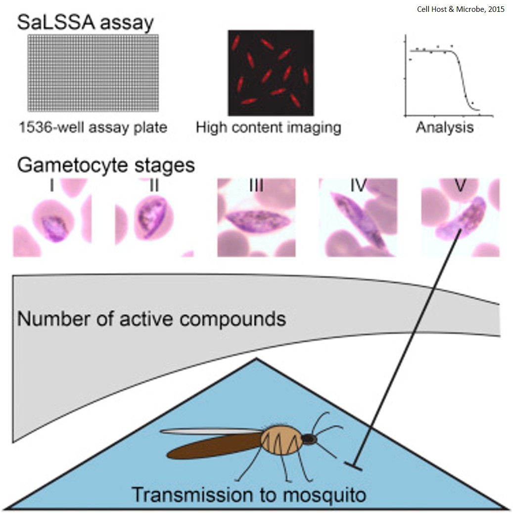 High-Throughput Assay for Malaria Transmission