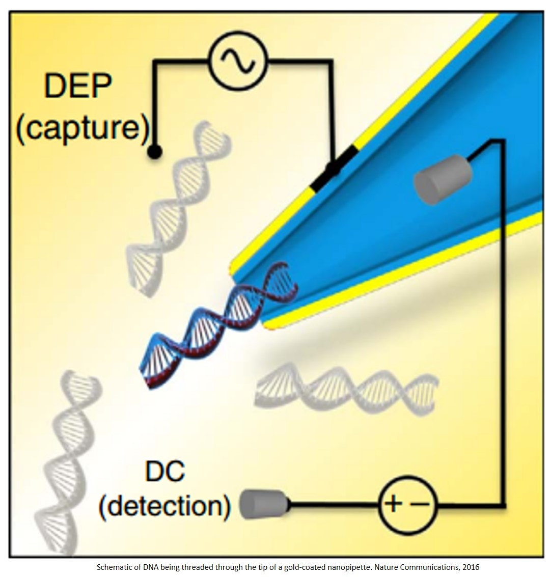 Nanopore sensing and dielectrophoretic trapping enables single molecule detection at femtomolar range
