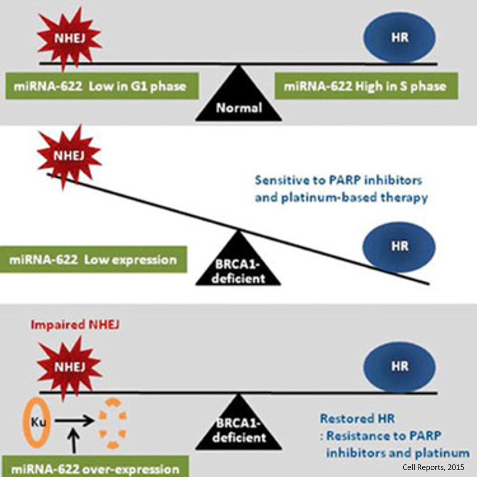 Micro RNA plays a role in resistance to platinum and PARP inhibitor in ovarian cancer