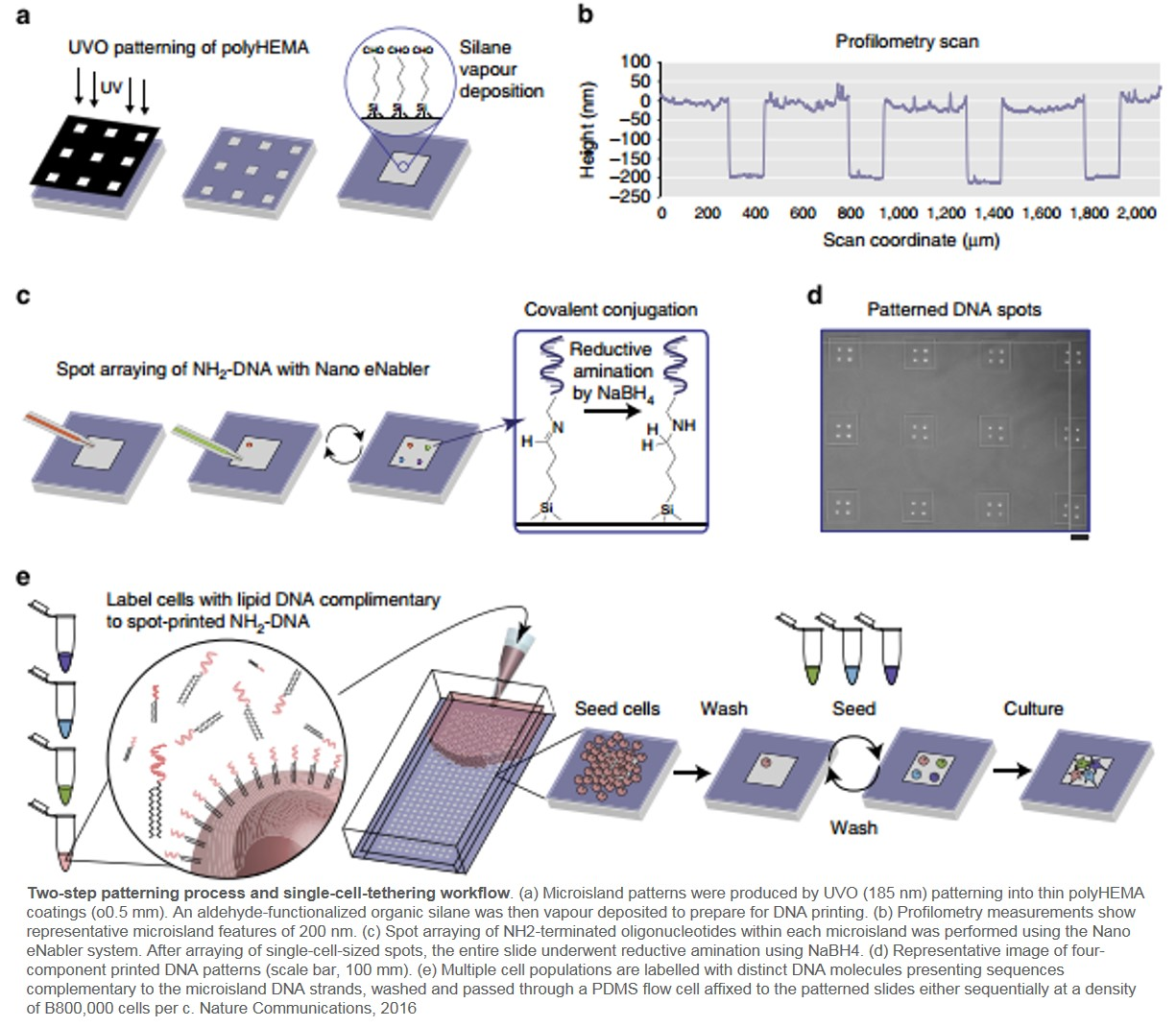 A high-throughput, multiplexed cellular platform to study cell-cell signalling networks