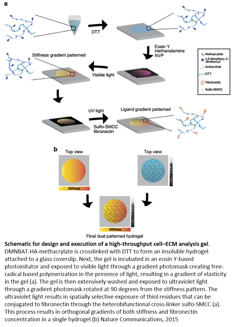 A synthetic hydrogel for the high-throughput study of cell-ECM interactions