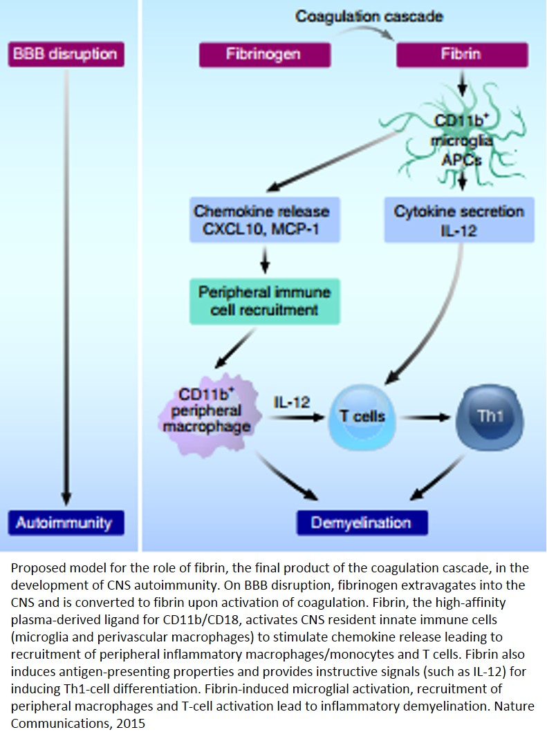 Link between blood coagulation and CNS autoimmunity