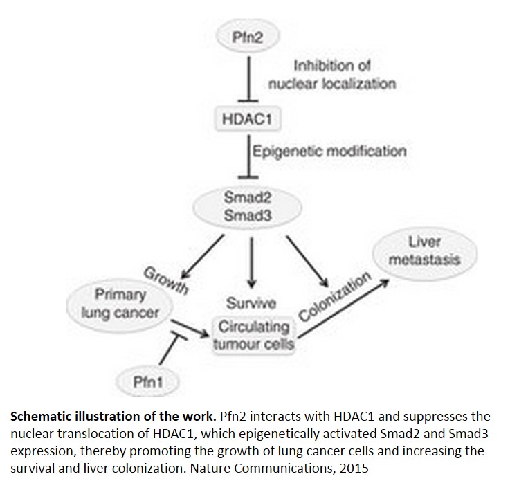 Mechanism of epigenetic regulation of lung cancer growth and metastasis