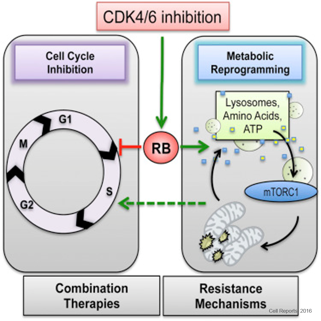 Metabolic Reprogramming of Pancreatic Cancer by Certain Drugs