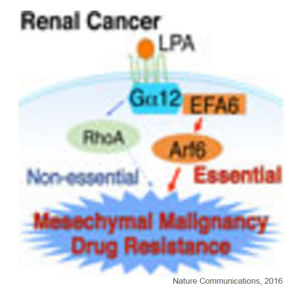 Lysophosphatidic acid signaling pathway in renal mesenchymal cancer
