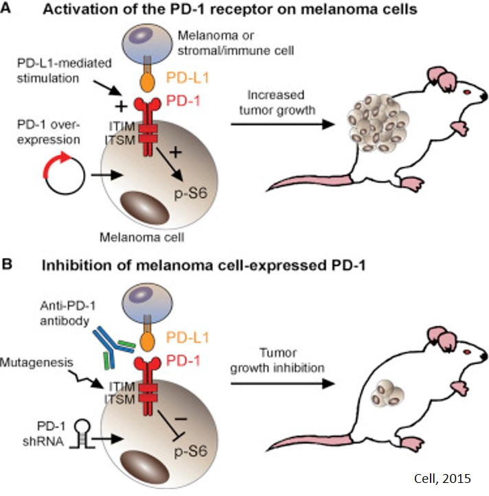 download Advanced Ceramic Coatings and