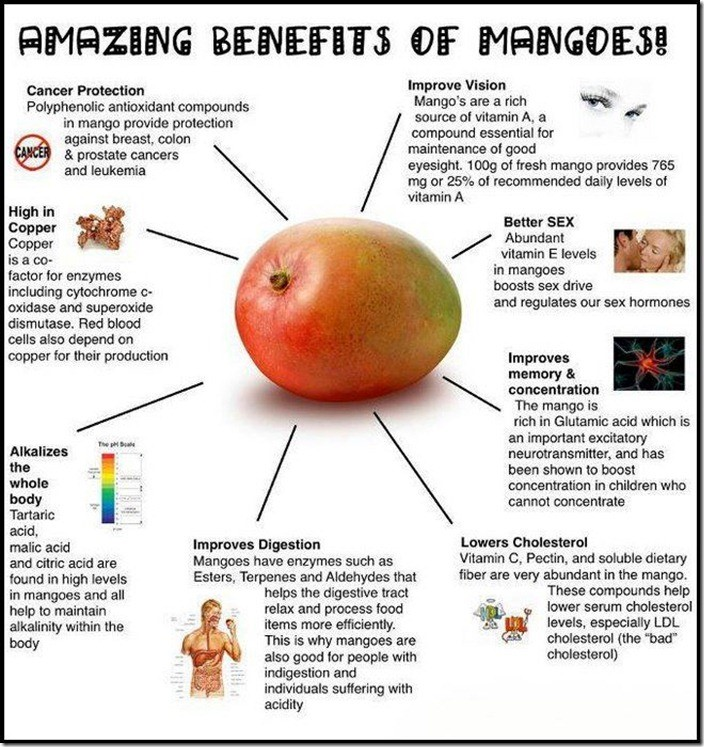 Absorption of polypehnolic compounds in mangos shows potential benefits to human health