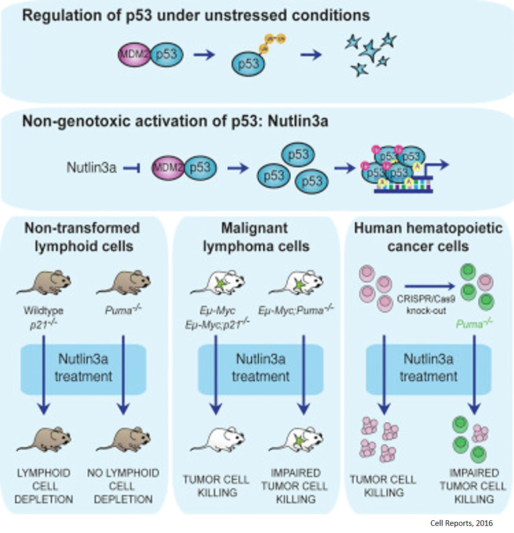 Mechanism of action of new cancer drug