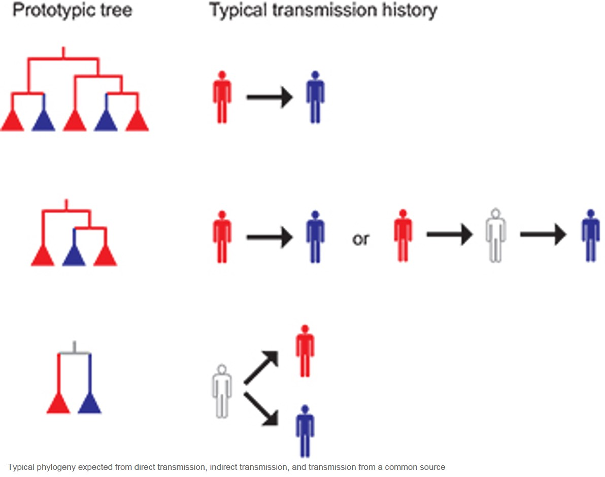Phylogenetic reconstruction of disease transmission