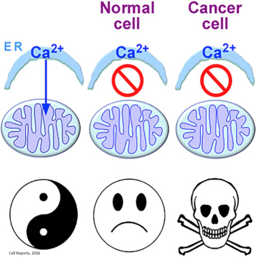 Mitochondrial calcium addiction in cancer cells
