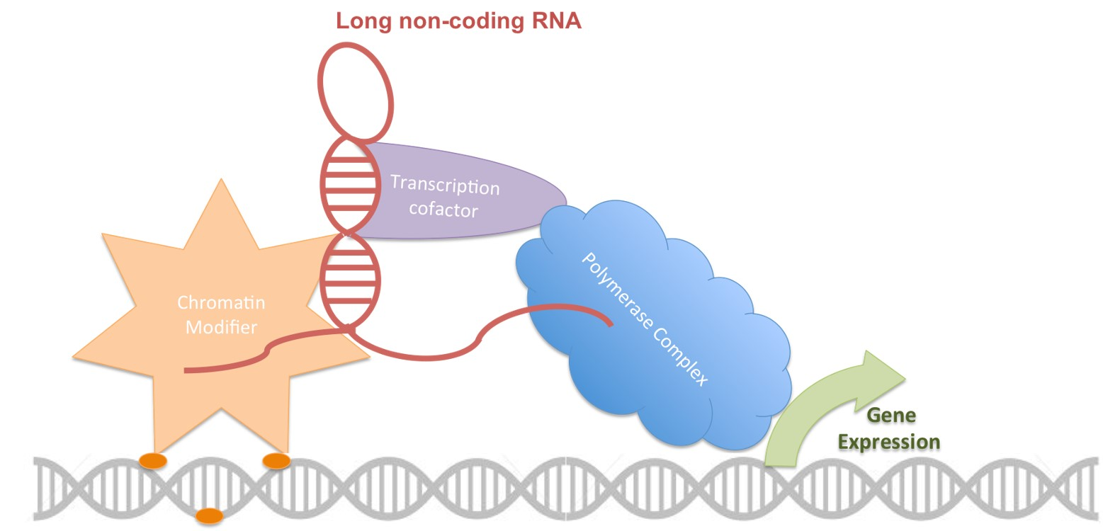 Long non-coding RNA addiction in melanoma skin cancer