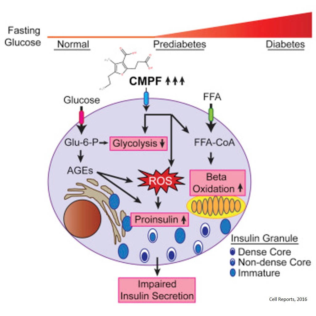 Rapid Elevation of Fatty Acid Metabolite May Act As a Tipping Point in Diabetes Development