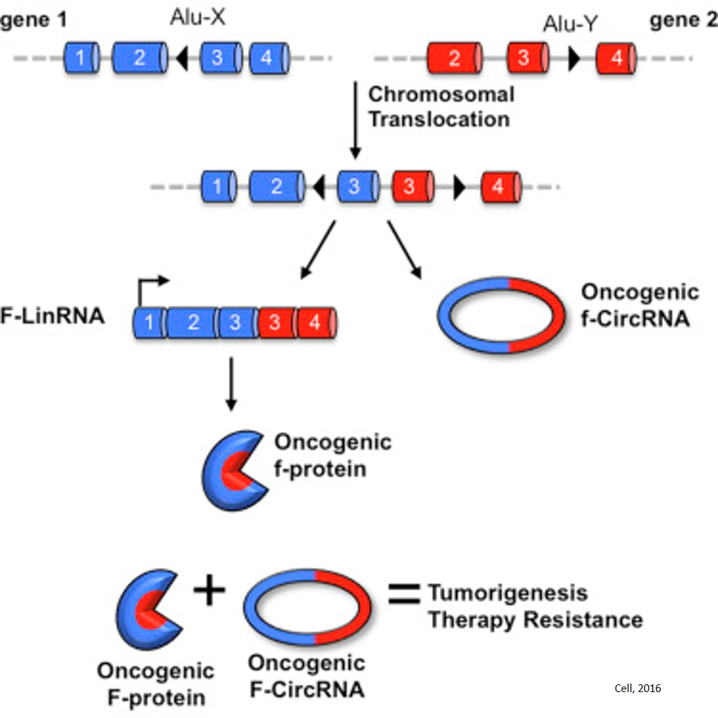Circular RNAs implicated in cancer