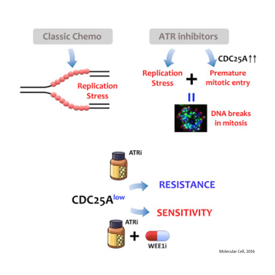 A new mechanism of resistance to chemotherapy