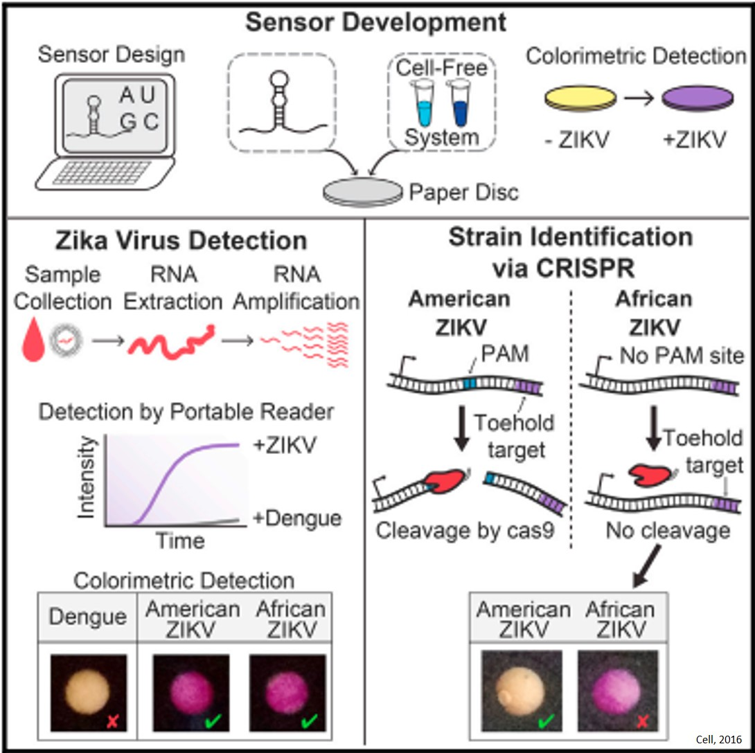 A novel, inexpensive paper method for detecting the Zika virus