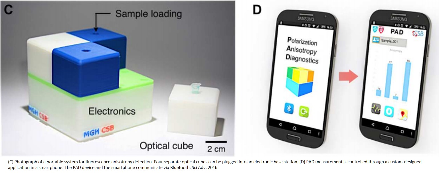 A device for rapid diagnosis of bacterial infections