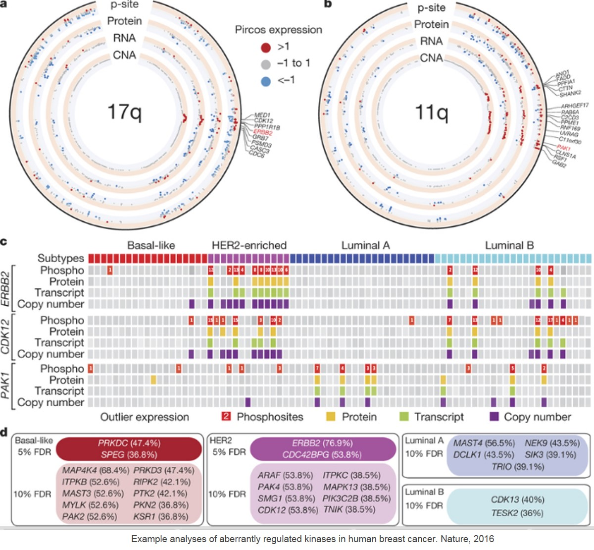 First large-scale proteogenomic study of breast cancer provides insight into potential therapeutic targets