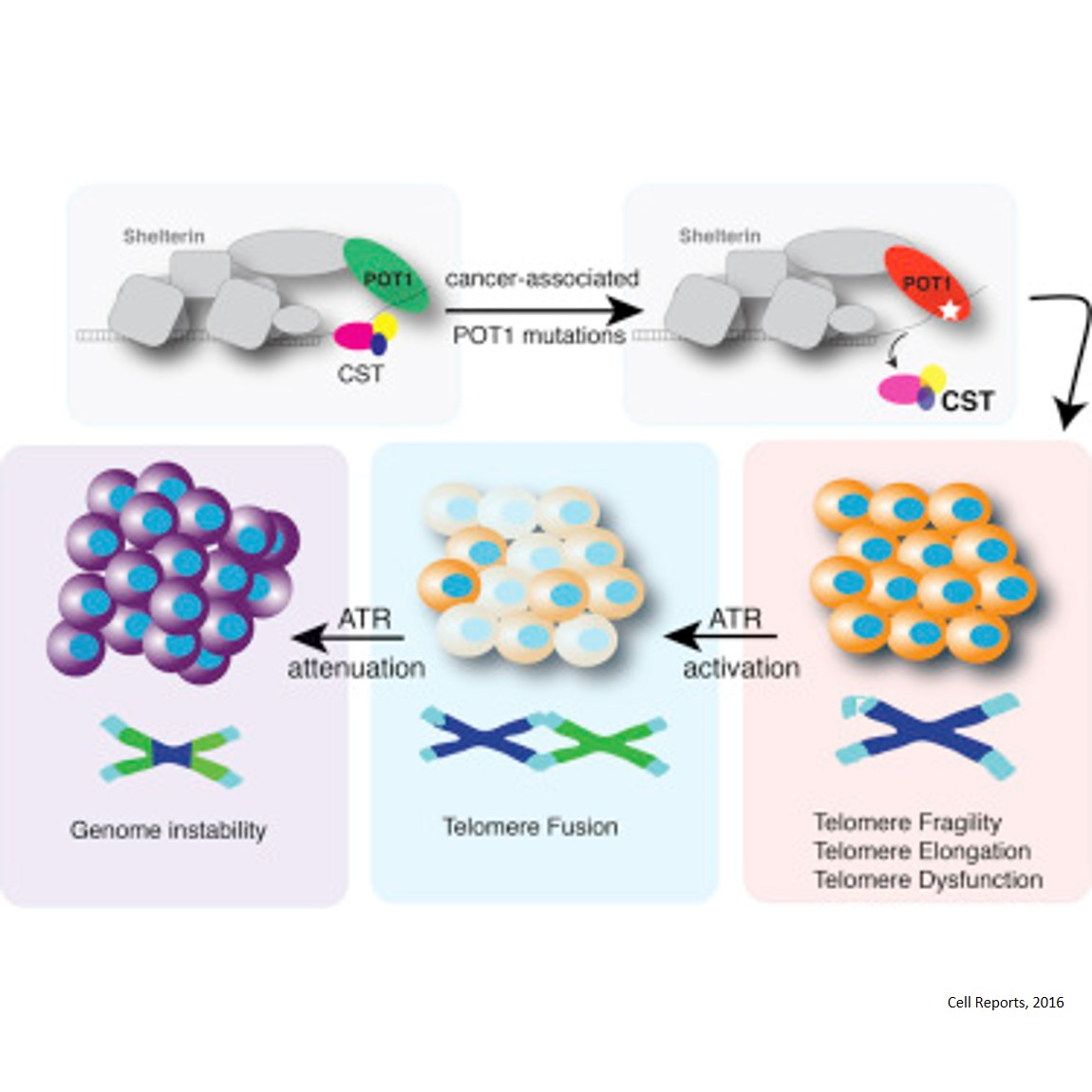Mechanism that turns mutant cells into aggressive cancers