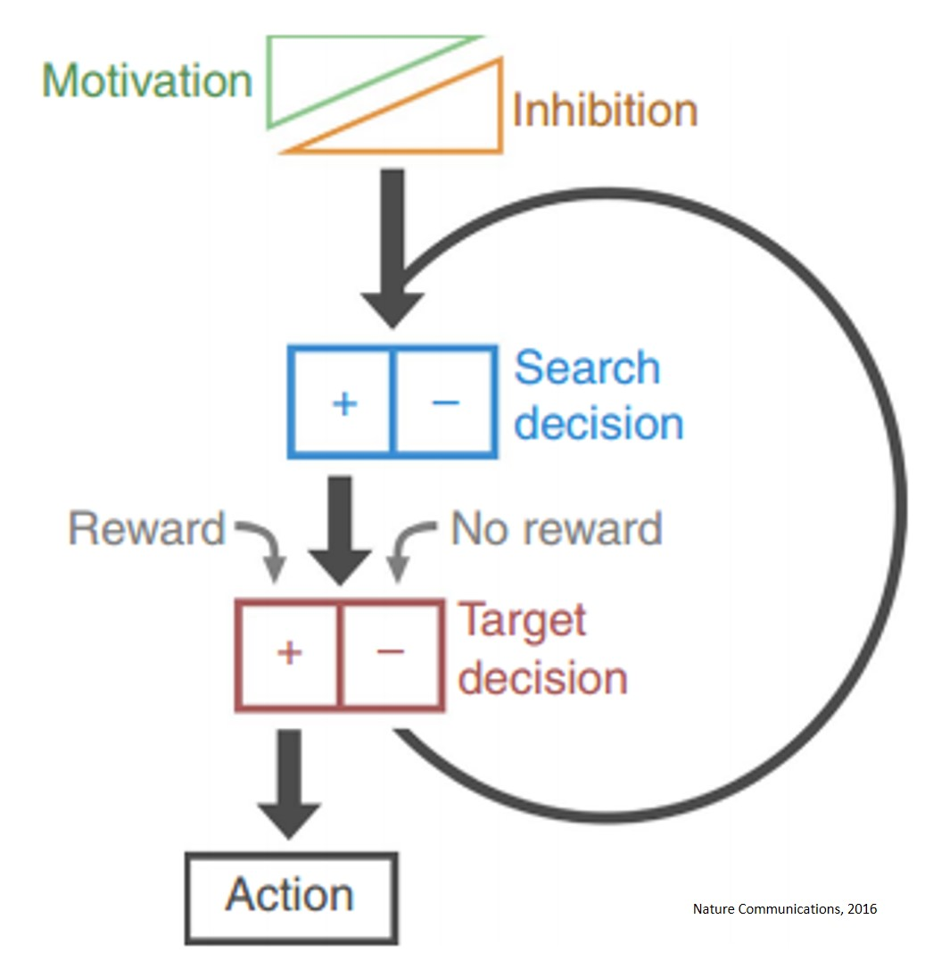 A two-neuron system for adaptive goal-directed decision-making
