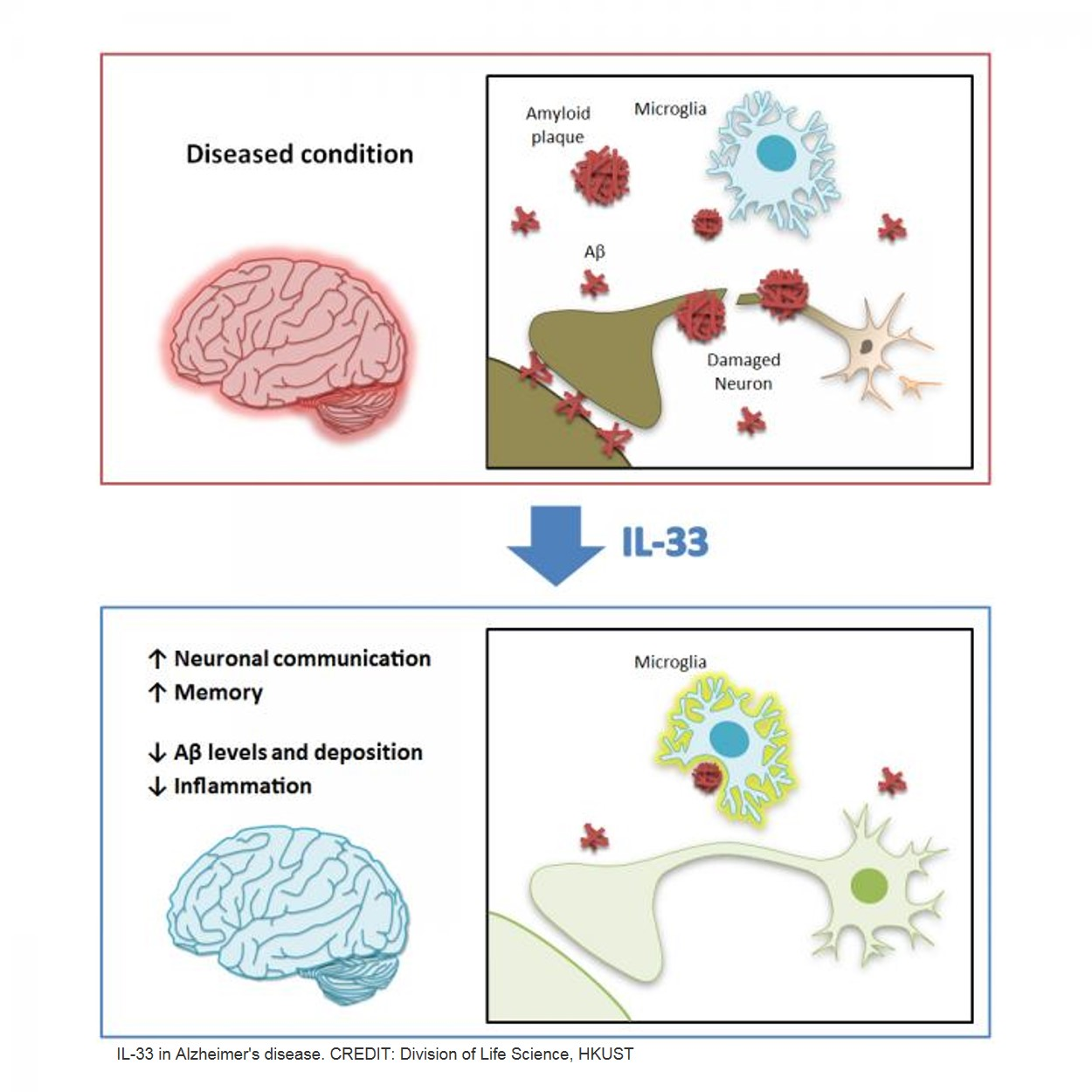 IL-33 ameliorates Alzheimer's-like pathology and cognitive decline