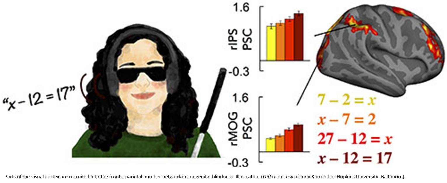 Blindness and numerical thinking