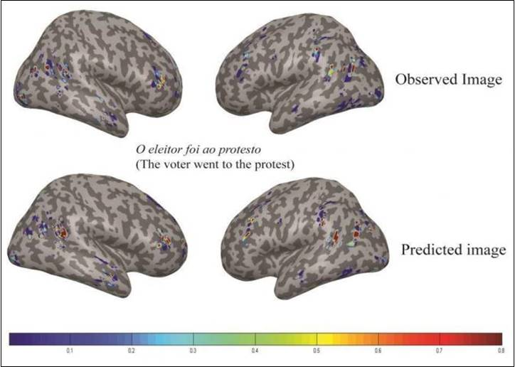 English and Portuguese are processed similarly in the brain